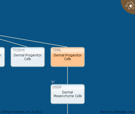 Dermal Progenitor Cells