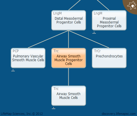 Airway Smooth Muscle Progenitor Cells