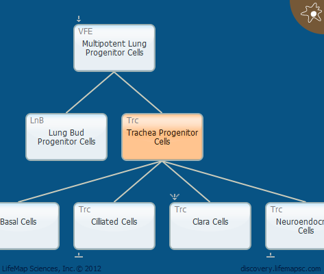 Trachea Progenitor Cells
