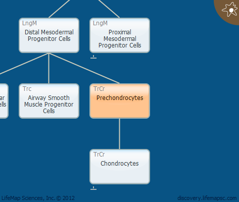 Prechondrocytes