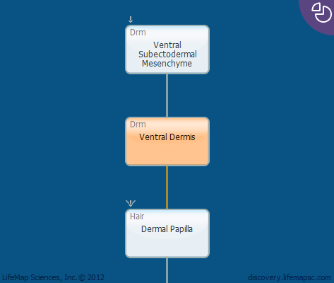 Ventral Dermis
