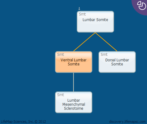 Ventral Lumbar Somite
