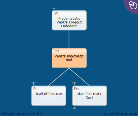 Ventral Pancreatic Bud