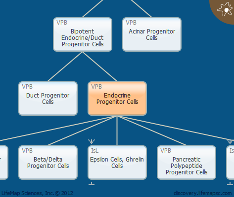 Endocrine Progenitor Cells