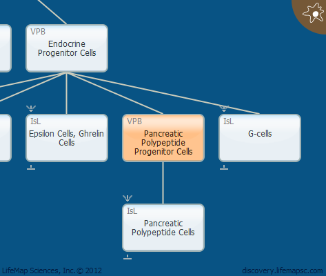 Pancreatic Polypeptide Progenitor Cells