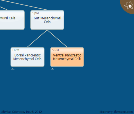 Ventral Pancreatic Mesenchymal Cells