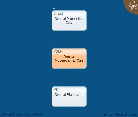 Dermal Mesenchyme Cells