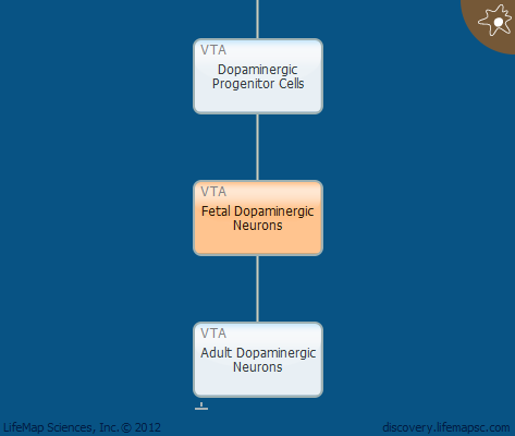 Fetal Dopaminergic Neurons