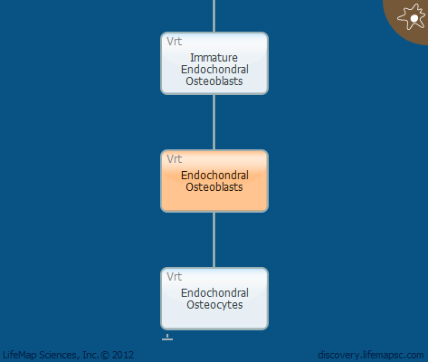 Endochondral Osteoblasts