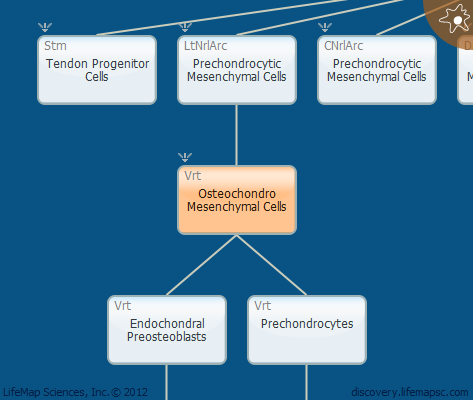 Osteochondro Mesenchymal Cells