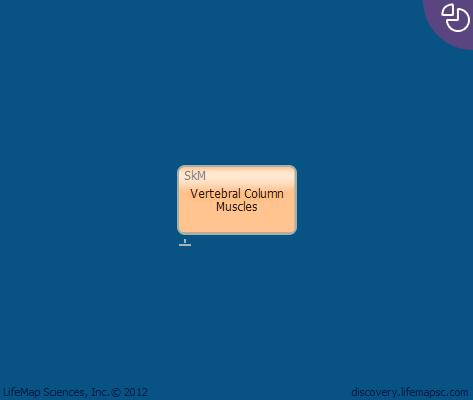 Vertebral Column Muscles