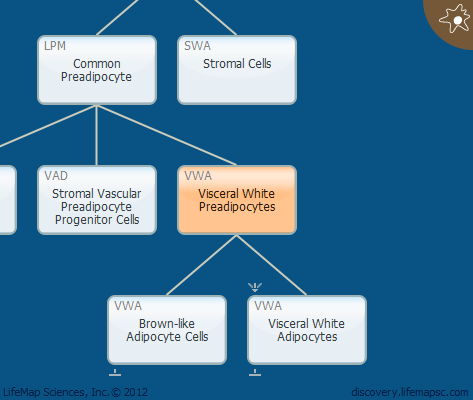 Visceral White Preadipocytes