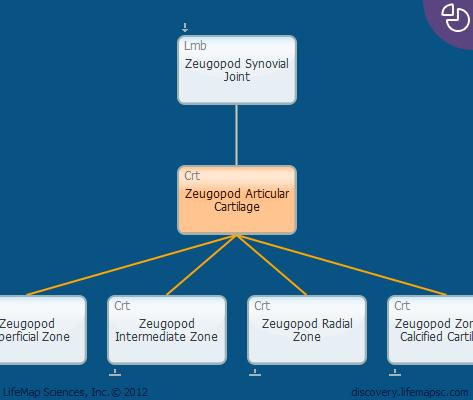 Zeugopod Articular Cartilage