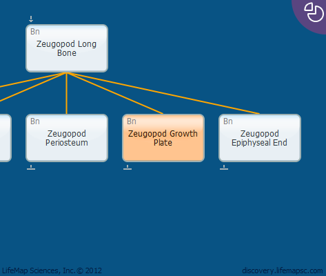 Zeugopod Growth Plate