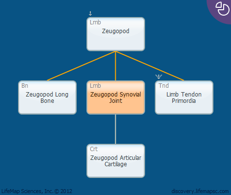 Zeugopod Synovial Joint