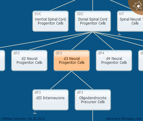 d3 Neural Progenitor Cells