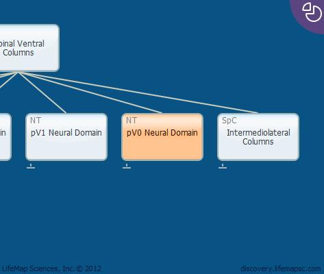 pV0 Neural Domain