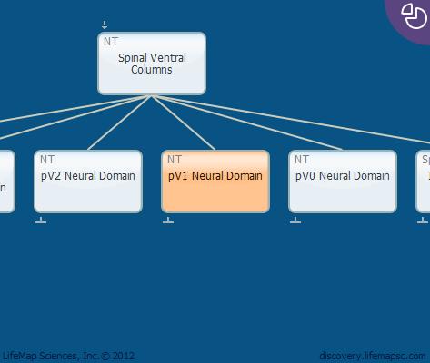 pV1 Neural Domain