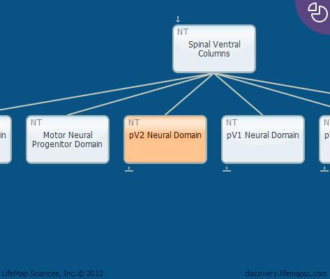 pV2 Neural Domain
